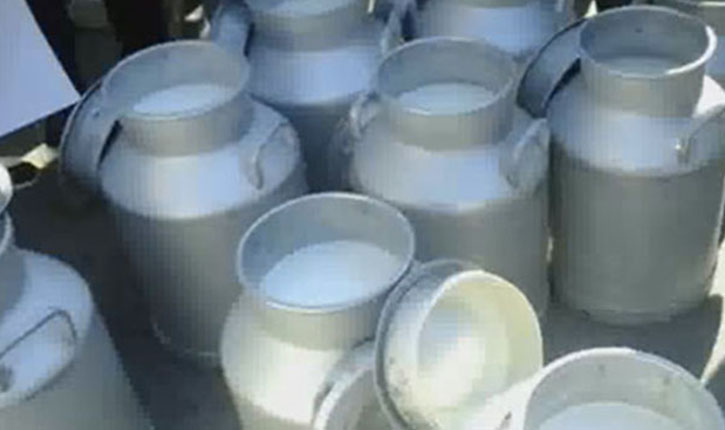 انتاج الحليب
